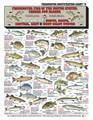 Tightlines 00021 Fish ID Chart #8 1232-0008