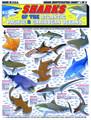 Tightlines 00022 Shark ID Chart #1 1232-0011