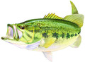 AFN ST5599 Large Mouth Bass Decal 5158-0024