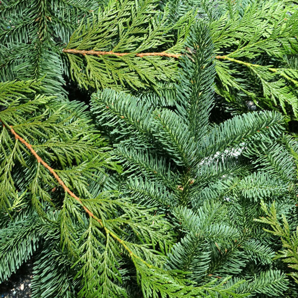 An assortment of holiday boughs harvested fresh from Oregon forests