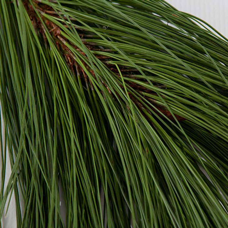 Ponderosa pine boughs harvested fresh from Oregon forests