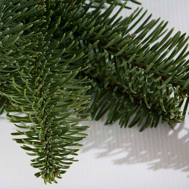 Noble fir boughs harvested fresh from Oregon forests