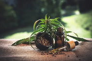 Everything You Wanted To Know About CBD But Were Too Afraid To  Ask?