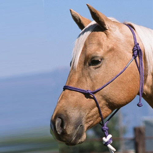 The #124 Halter, designed and used by Buck Brannaman, the favorite rope halter of trainers and riders everywhere. They are 6mm diameter with a nylon core and a 16 strand nylon cover. The smaller diameter gives the horseman greater control and response. The braided knot on the tail allows you to slip the halter over the horses head without untying the halter. Offered in Weanling, Yearling, Cob, Arabian, Saddle Horse, Warmblood, Mule and Draft sizes.  Available in Classic and Riata colors.