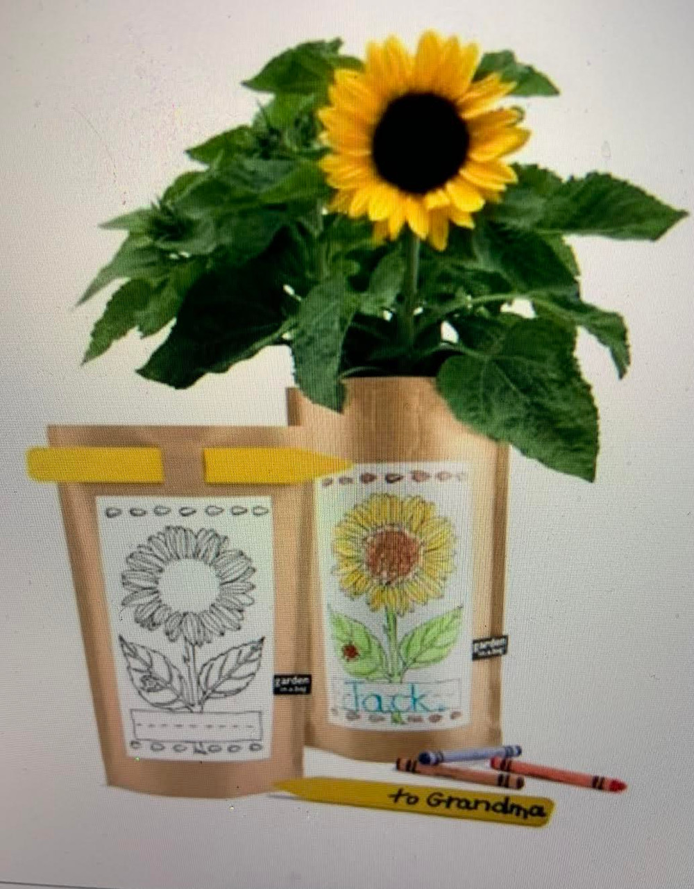 Temporarily Sold Out! Sunflower Garden In A Bag For Budding Gardeners!