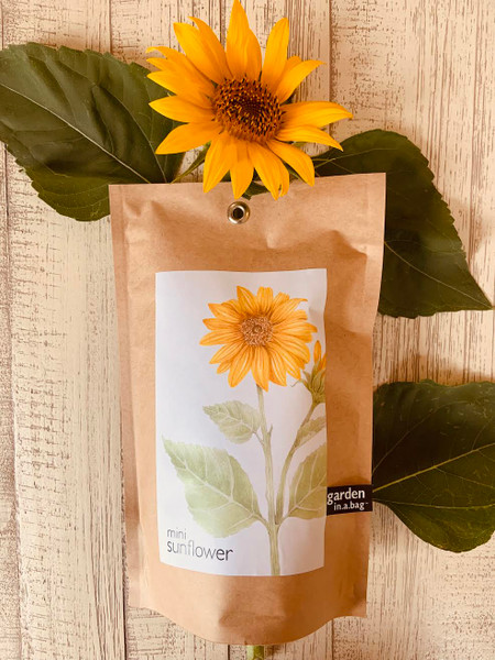 Sunflower Garden In A Bag: Easy To Grow Indoors On Any Sunny Windowsill!