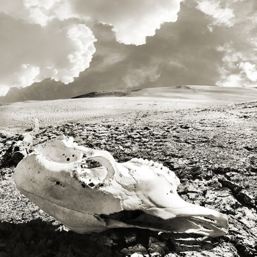 skulls, white sands, east texas, cow skull, skull art, sky art, texas sky, west texas sky, new mexico sky, desert art, black and white, texas art, texas artist, sort of cool art, cactus, surrealist art, texas surrealism, betsy crum, carl crum, caya crum
