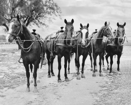 horses, old photo, parker county sheriff posse, black and white horses, sort of cool art, crum, jy crum, carl crum, tom crum, caya crum, betsy crum, weatherford rodeo, rodeo, horse art, horses, i love horses