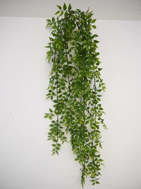 Smillex Bush Vine x 139 LVS