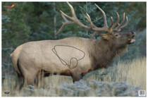 "Birchwood Casey Eze-Scorer Elk Target, 23x35"", 100/Case"