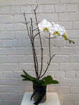 Luxe Orchid Vase