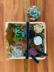 DIY Terrarium Kit - (Small)