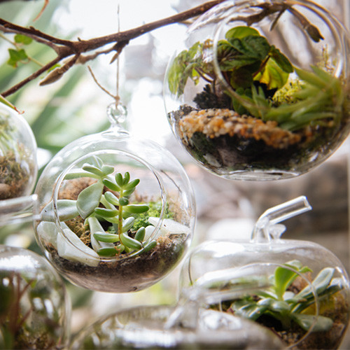 Assorted Terrariums from
