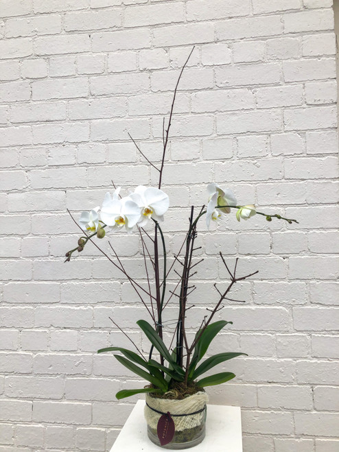 Extra Luxe Orchid Vase