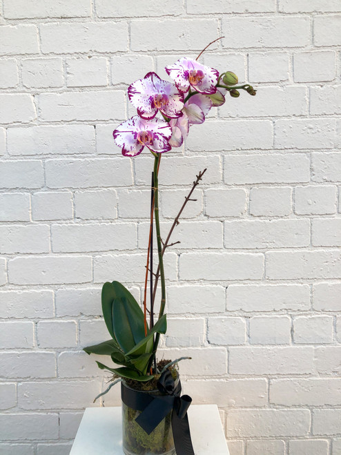 Coloured Luxe Orchid Vase