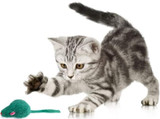Kitten Cat Kitty Real Fur & Feather Toy Mice 1/Pk Select: Color