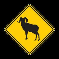 W11-18 Bighorn Sheep