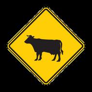 """12"""" W11-4 Cattle"""