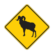 "12"" W11-18 Bighorn Sheep"