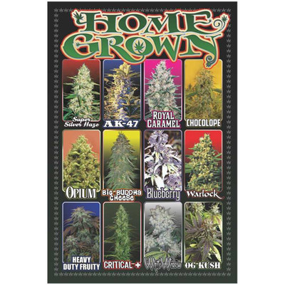 Home Grown Pot Shots Poster for sale unrolled for a complete view.