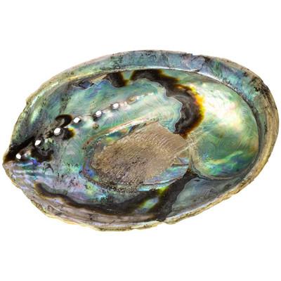 Large Abalone Shell Smudging Bowl