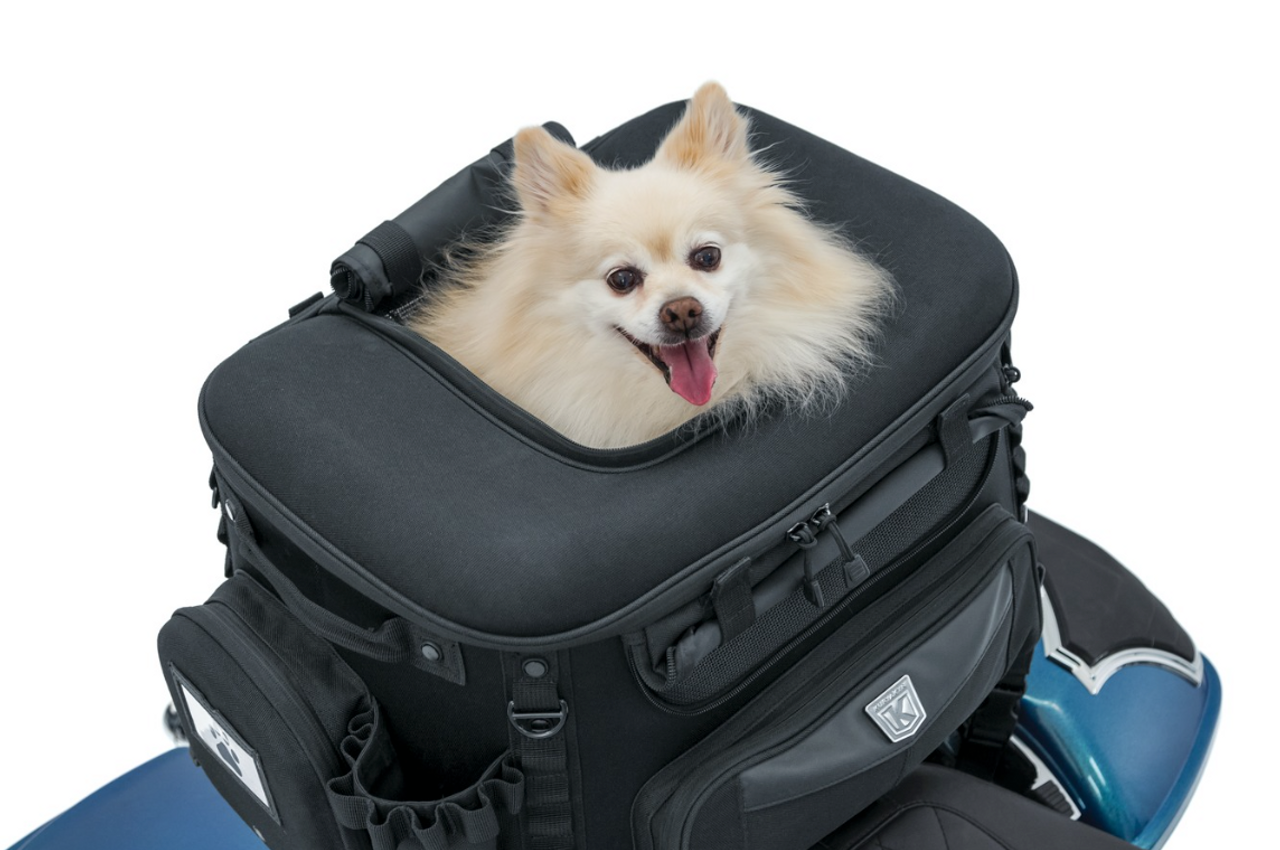 Grand Pet Palace - Ideal for small dogs