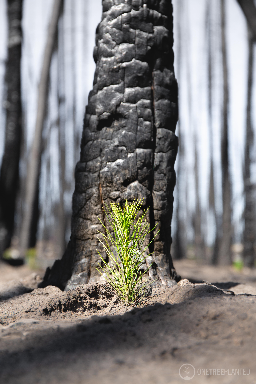 one-tree-planted-57.jpg