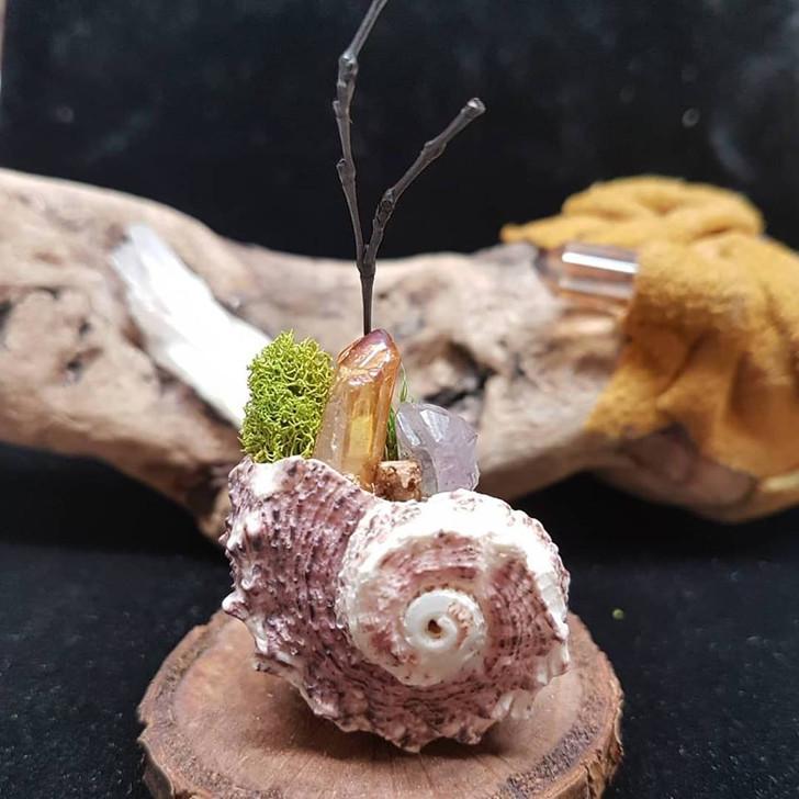 Snail Shell Mini Terrarium