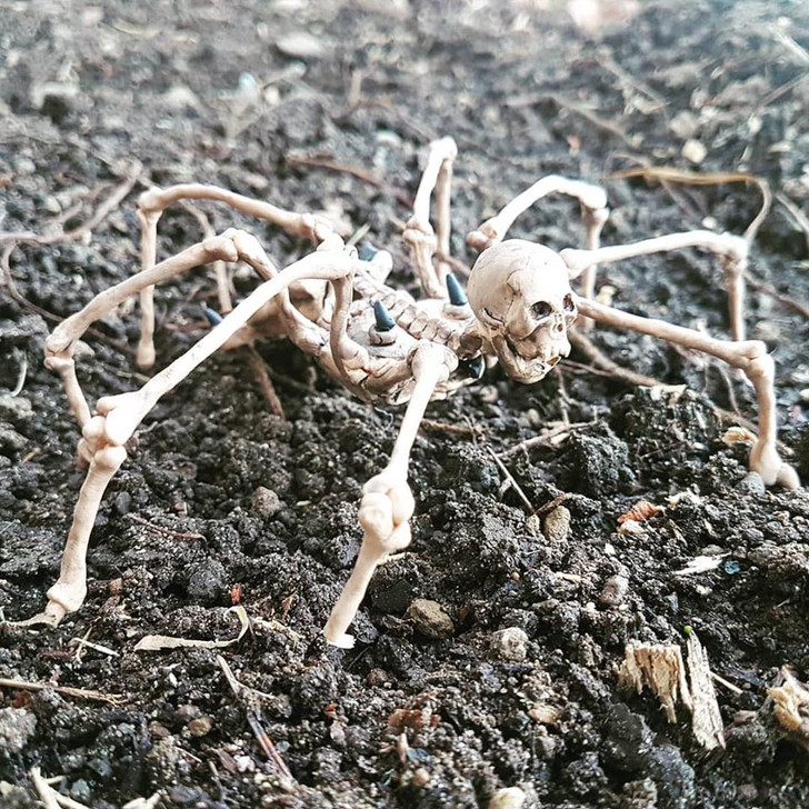 Skeleton Spider Specimen #3