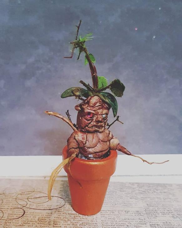 Mandrake Mini Pot 4