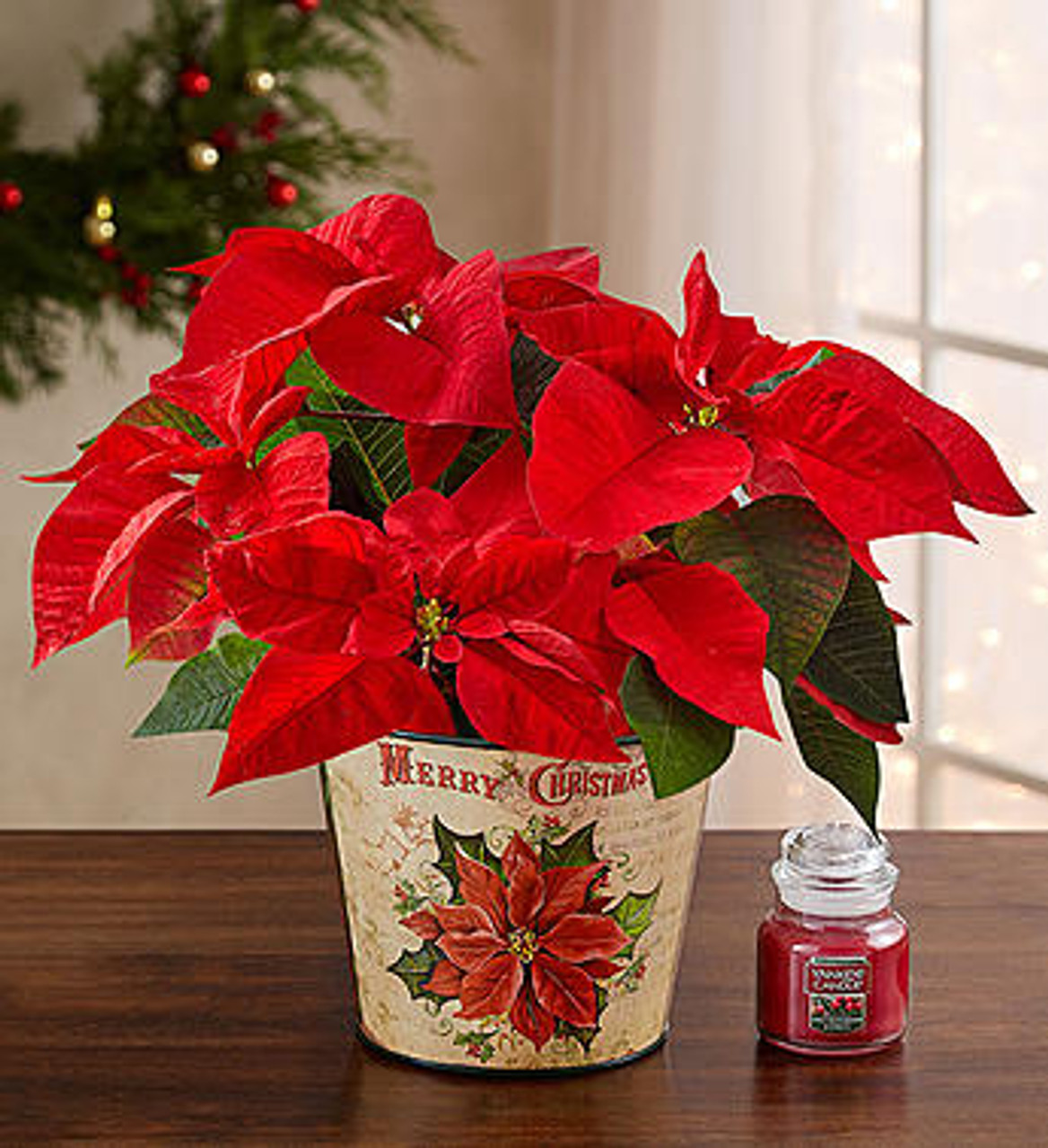 Holiday Traditions Poinsettia Conroy S Flowers