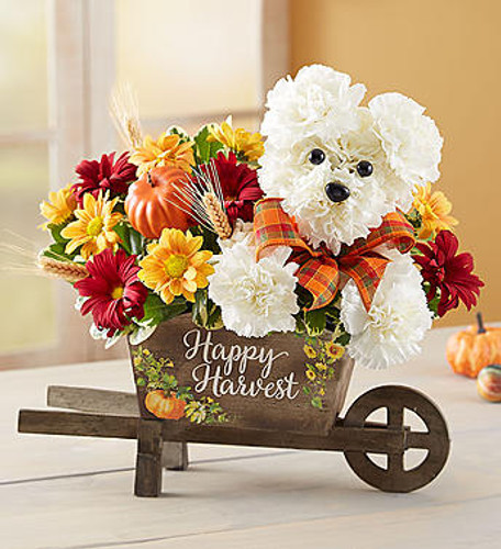 "EXCLUSIVE Get the fall fun rolling along with our beloved a-DOG-able arrangement. Arriving in our new keepsake wheelbarrow, this playful pooch is hand designed from fresh, white carnations. The weathered wooden wheelbarrow features a charming ""Happy Harvest"" message, creating a rustic décor piece to celebrate the season."
