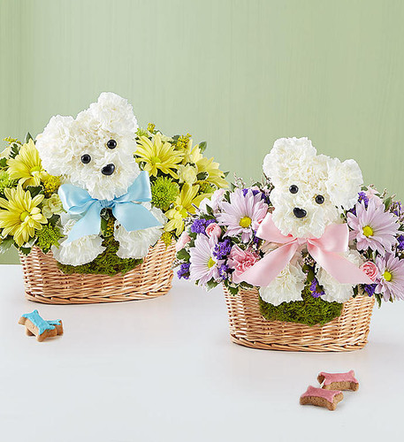 "It's a-DOG-able® Boy or Girl When it comes to new baby gifts, our truly original arrangement is the pick of the litter! Fresh white carnations are expertly crafted in the shape of an adorable dog, surrounded by a mix of fresh, colorful blooms and nestled inside a charming basket. Choose ""baby girl"" or ""baby boy"" for a sweet surprise that'll leave the new parents smiling."