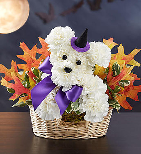 Witchy Pooch™ EXCLUSIVE Our truly original Halloween a-DOG-able® will have everyone howling with delight. Handcrafted from fresh, white carnations and colorful, dried oak leaves, this floral pooch creation comes complete with a black witch's hat, making it a fun gift for parties, fall birthdays, or simply to scare up some smiles. Add our Happy Halloween Mylar balloon to really lift their spirits!