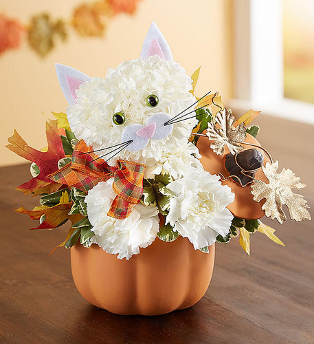 "EXCLUSIVE If they love cats, they'll fall for this fabulous feline. Our unique kitty arrangement is crafted from fresh, white carnations and dons a charming, seasonal plaid ribbon. She arrives in our artful ceramic pumpkin complete with lid, gold-glittered and oak leaf accents, which can be later used to hold treats, or simply to add a delightful touch of fall décor.  One-sided 3D arrangement with white carnations and greenery; accented with dried oak leaves and decorative ribbon Crafted in the shape of a cat, complete with eyes, ears, and mouth with whiskers Artistically designed in our reusable orange ceramic pumpkin canister with lid and decorative gold glitter, metallic leaves; measures 6""H x 5""W x 5""L Arrangement measures approximately 11""H x 9""L"