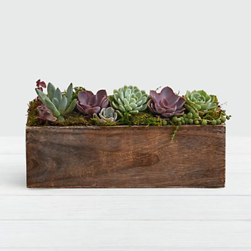 Looking to try the modern farmhouse trend? A handmade wooden trough made with reclaimed wood means you get a one–of–kind succulent garden. The assorted succulents come in an array of colors so this gift will get even better as it grows.