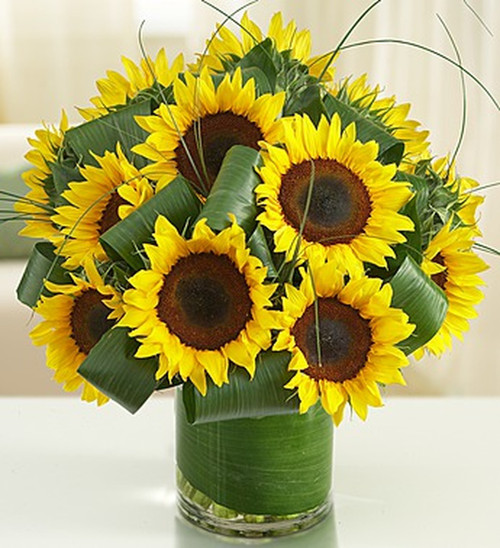 Put a bright smile on their face with our fresh sunflower bouquet! This gorgeous arrangement is beaming with vibrant yellow sunflowers and accented with delicately folded aspidistra leaves for a unique and stylish touch. Set in a clear glass vase, it makes a charming party centerpiece, birthday gift or pick-me-up on a less-than-sunny day.