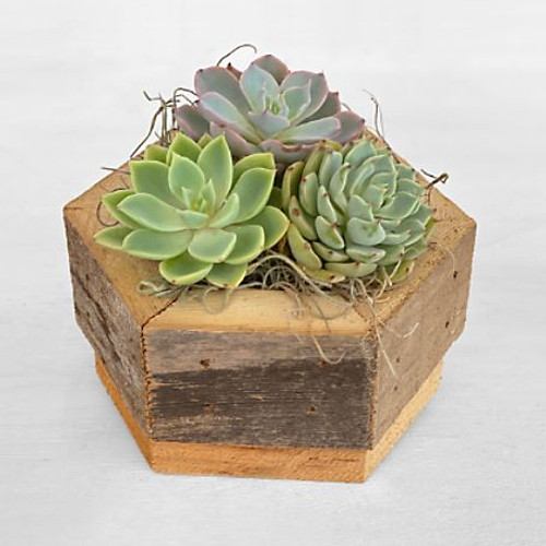 Perfect for modern décor or to simply add some freshness, our Zen Succulent garden is a gorgeous gift. A collection of beautiful succulents fill a wooden, hexagon-shaped container bring serenity to their space.