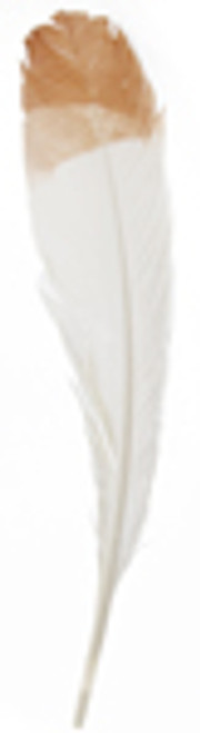 "12"" Turkey Quills -White with Brown tips"