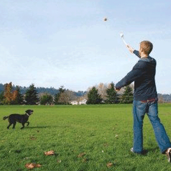Sport Launcher Dog Toy