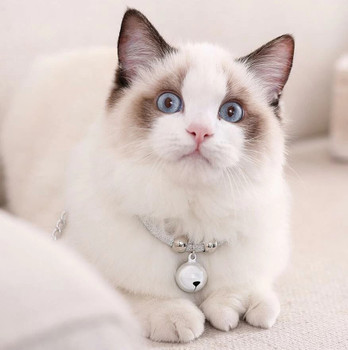 Bell Pendant Collar for Cats or Small Dogs