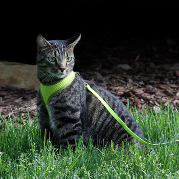 Comfort Soft Adjustable Harness with 6' Leash for Cats & Small Dogs