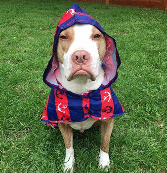 Lightweight Packable Dog Rain Poncho