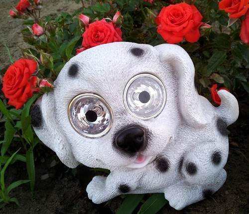Our Dalmatian solar dog light had White LED in his spotlight eyes.