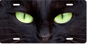 Black Cat with Green Eyes Brushed Metal Auto Plate sku TB9171ZG