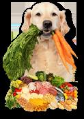 Balanced Diet for Pet