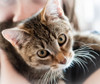 Reiki is suitable for cats - they really enjoy the gentle energy! Great for nervous pets or animals recovering from an operation, an injury or illness.