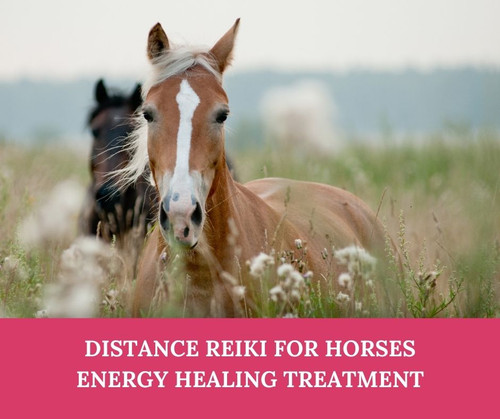 Distance Reiki Treatment for Horses & Large Animals