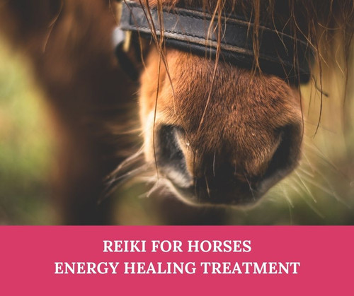 Reiki Treatment for Horses  & Ponies - Equine Reiki treatment at your yard