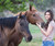 Horses can really benefit from healing Reiki and most respond very well to it. Horses are very sensitive and are aware of Reiki energies.